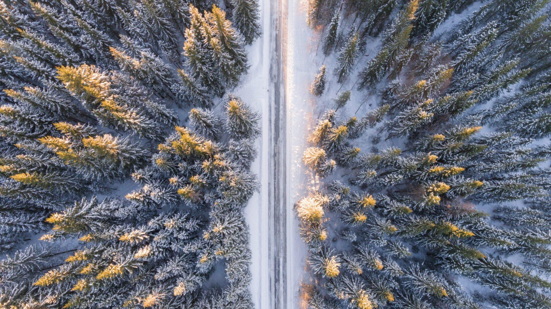 Sniegots ceļš ziemā, egles